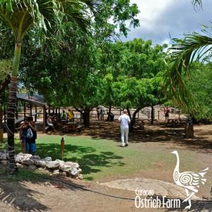 Struisvogel Farm Curacao