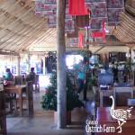 curacao-ostrich-farm-11