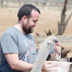 curacao-ostrich-farm-13