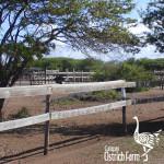 curacao-ostrich-farm-14
