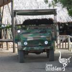 curacao-ostrich-farm-15
